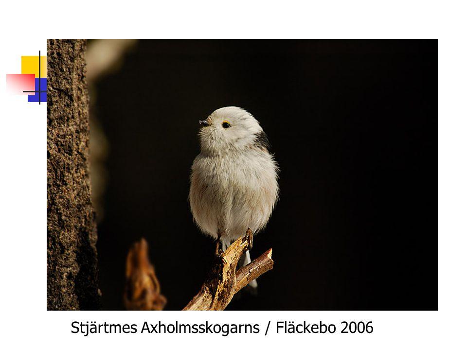 Stjärtmes Axholmsskogarns / Fläckebo 2006