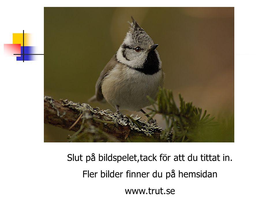 Slut på bildspelet,tack för att du tittat in. Fler bilder finner du på hemsidan www.trut.se
