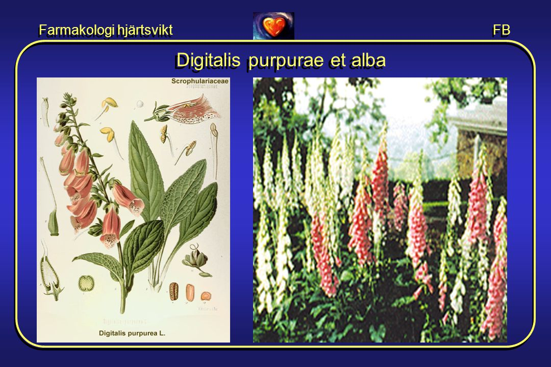 Farmakologi hjärtsvikt FB Digitalis purpurae et alba