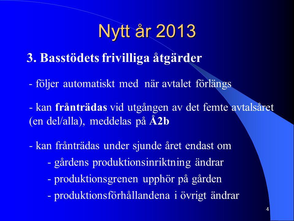 Nytt år 2013 3.