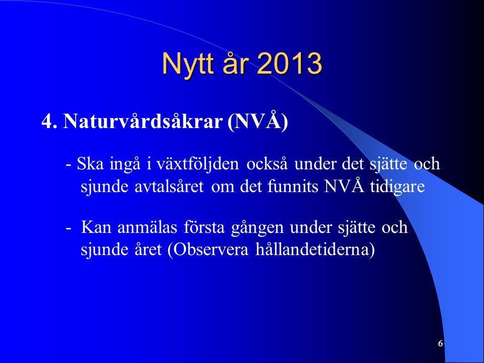 Nytt år 2013 4.