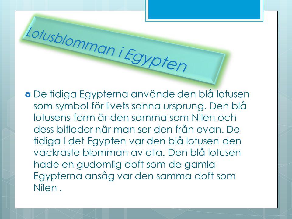  De tidiga Egypterna använde den blå lotusen som symbol för livets sanna ursprung. Den blå lotusens form är den samma som Nilen och dess bifloder när