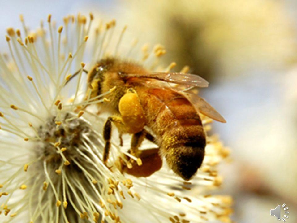 Daglig användning av honung och kanel stärker immunförsvaret och skyddar kroppen från bakterier och från virusangrepp.