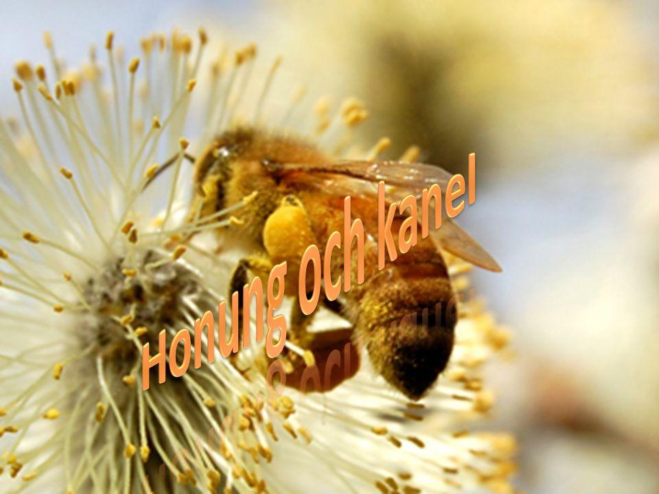 Gör en kräm av honung och kanelpulver, bred ut den på bröd ät det regelbundet till frukost.