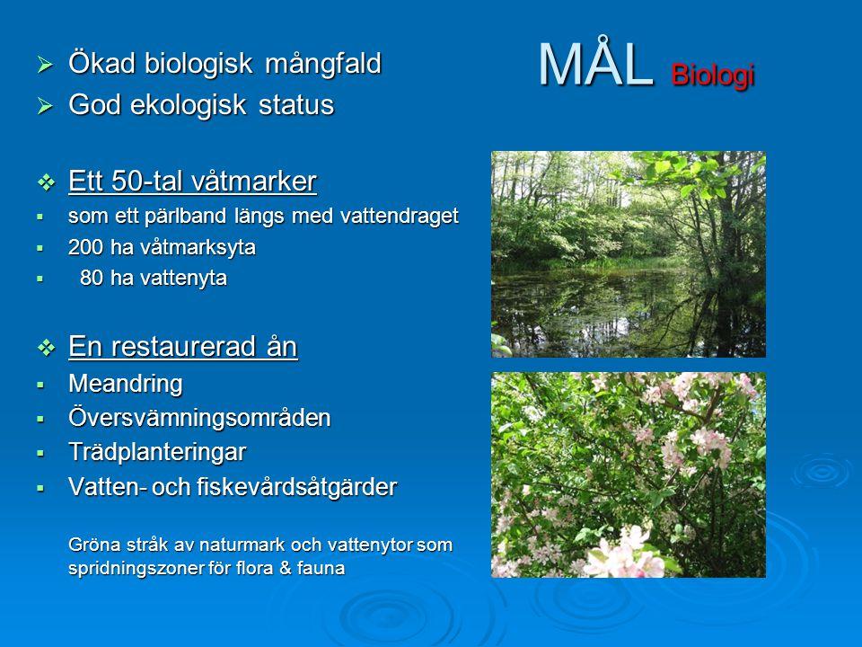 MÅL Biologi  Ökad biologisk mångfald  God ekologisk status  Ett 50-tal våtmarker  som ett pärlband längs med vattendraget  200 ha våtmarksyta  8