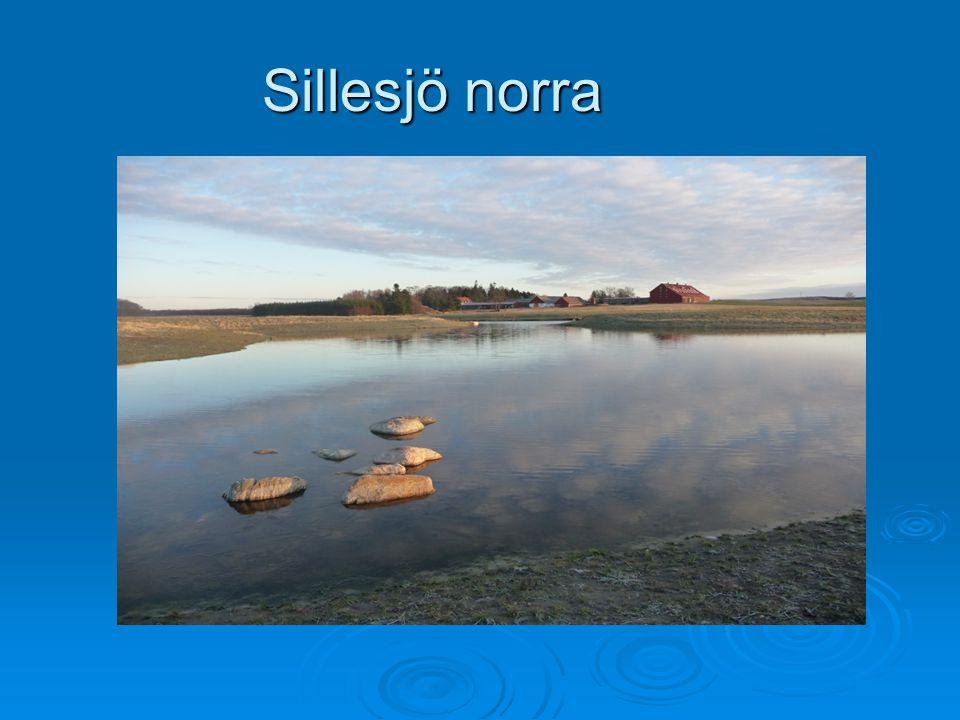 Sillesjö norra