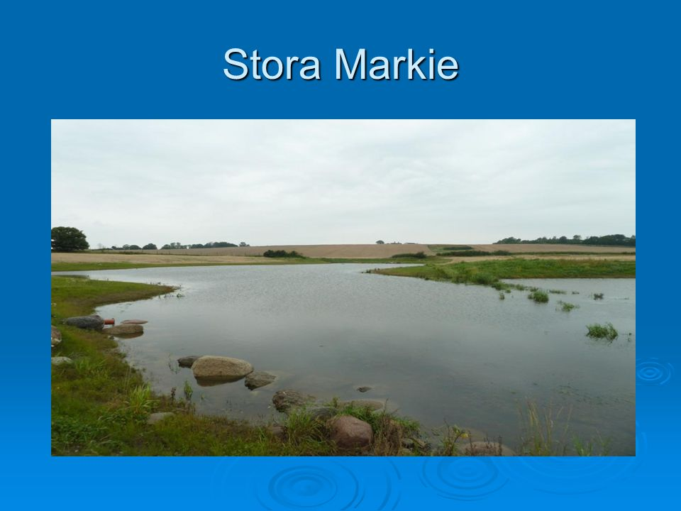 Stora Markie