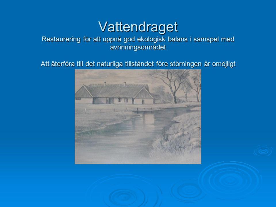 Vattendraget Restaurering för att uppnå god ekologisk balans i samspel med avrinningsområdet Att återföra till det naturliga tillståndet före störning
