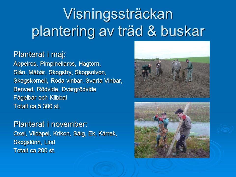 Visningssträckan plantering av träd & buskar Planterat i maj: Äppelros, Pimpinellaros, Hagtorn, Slån, Måbär, Skogstry, Skogsolvon, Skogskornell, Röda