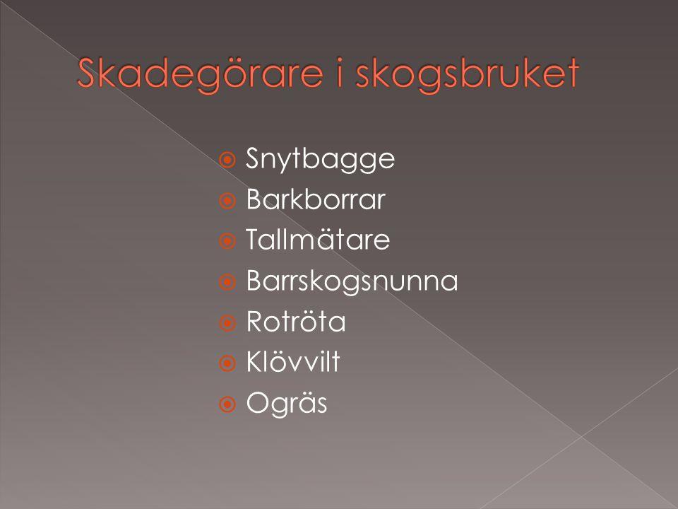  Snytbagge  Barkborrar  Tallmätare  Barrskogsnunna  Rotröta  Klövvilt  Ogräs