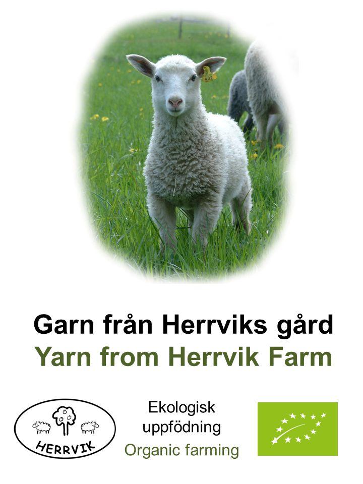 Vi följer naturens rytm i vår uppfödning, och lammen föds i april.