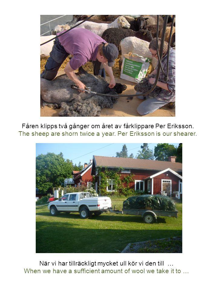 … ett spinneri i Estland, som drivs av traktens kvinnor.