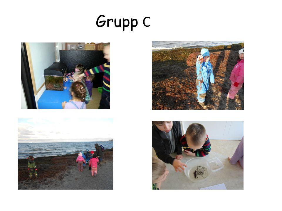 Grupp C