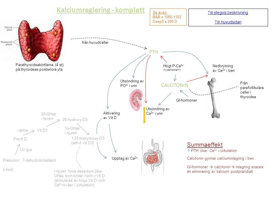 Kalciumreglering - komplett Till stegvis beskrivning Till huvudsidan Se även: B&B s 1086-1102 Desp5 s 290-3 Parathyroideakörtlarna (4 st) på thyroidea