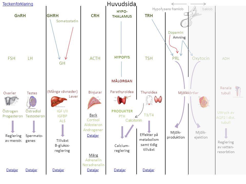 thecaceller granulosaceller Kvinnliga könshormon - stegvis Se även: B&B s 1141-62 Desp5 s 298-305 GnRH FSH LH Variabel pulsatil insöndring (1 puls/90 -240 min) androgener tillväxt självförstärkande feedback Mittfollikulär fas: hämning från dominant follikel, som själv överlever tack vare stimulering av egna FSH-receptorer  högre FSH-känslighet FSH-receptorer LH-receptorer Hög dos OVULATION corpus luteum östrogener + progesteron östrogener aromatas Y androgener aromatasöstrogener FSH LH GnRH Sen follikulär fas Y Använd höger/vänsterpil för att se stegvis beskrivning av menstruationscykelns hormonella styrning.