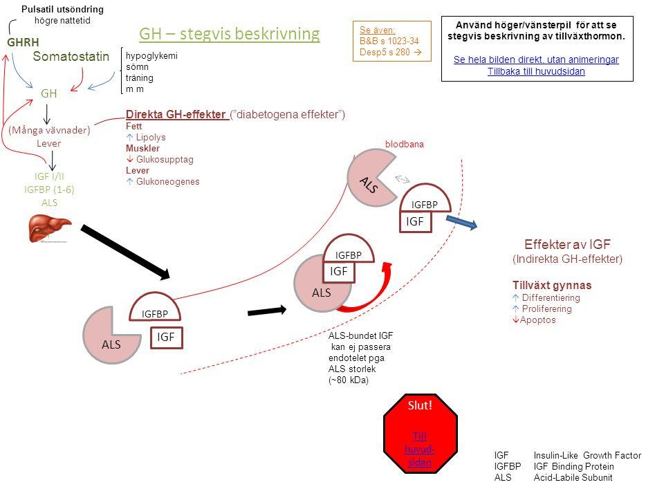 hypoglykemi sömn träning m Se även: B&B s 1023-34 Desp5 s 280  blodbana IGFInsulin-Like Growth Factor IGFBPIGF Binding Protein ALSAcid-Labile Subunit GHRH GH (Många vävnader) Lever IGF I/II IGFBP (1-6) ALS Pulsatil utsöndring högre nattetid ALS-bundet IGF kan ej passera endotelet pga ALS storlek (~80 kDa) ALS IGF IGFBP ALS IGF IGFBP IGF ALS IGFBP Effekter av IGF (Indirekta GH-effekter) Tillväxt gynnas  Differentiering  Proliferering  Apoptos GH – komplett Direkta GH-effekter ( diabetogena effekter ) Fett  Lipolys Muskler  Glukosupptag Lever  Glukoneogenes Somatostatin Till stegvis beskrivning Till huvudsidan