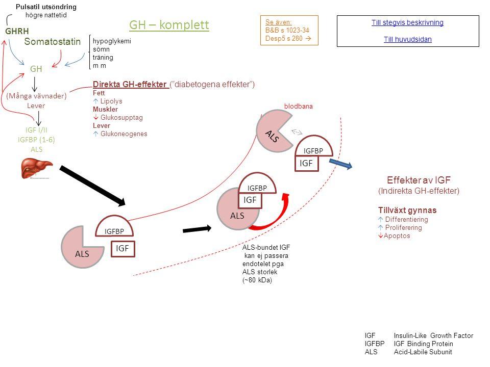 Binjurebarkshormon - stegvis Se även: B&B s 1049-61 Desp5 s 294-7 CRH ACTH STRESS Cortisol Aldosteron Androgener ANG II Hyperkalemi Resorb Na+ Utsöndr K+ i njurtubuli  B-glukos Proteolys Glukoneogenes Lipolys Permissiv för glukagon och katekolaminer Höjer CNS- excitabilitet SYNTES (sker vid behov) • de novo-syntes • från LDL • från lagrade kolesterylestrar 3  HD3-betahydrogenas xx-OHasxx-hydroxylas Kolesterol HO AB C D Pregnenolon 17,20- desmolas O D 17  - OHas O D OH Aldosteron aldosteron- syntas O HO O CH 2 OH OH O Använd höger/vänsterpil för att se stegvis beskrivning av binjurebarkens hormoner.