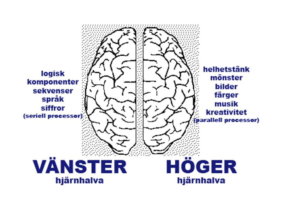 Kvinnors och mäns hjärnor ser olika ut.