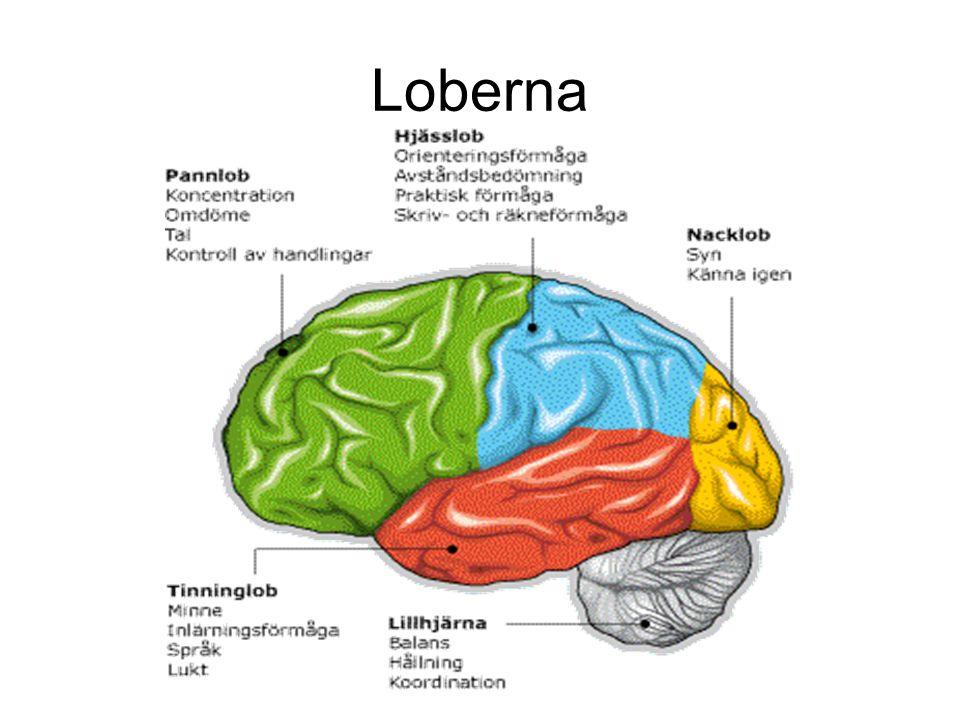 Amygdala är centrat för ….