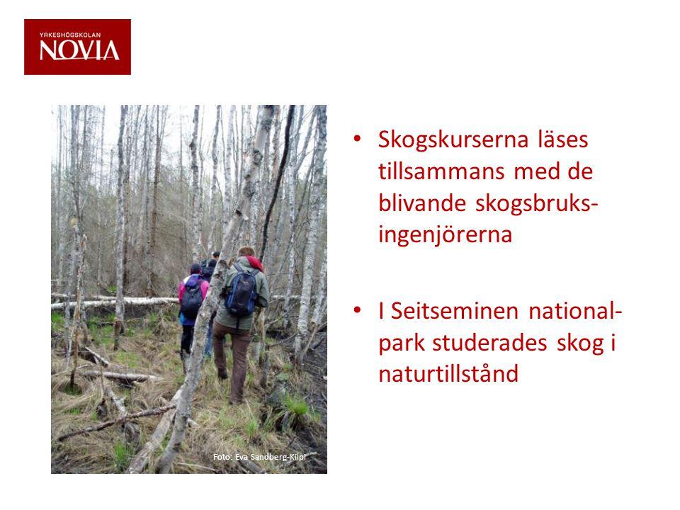 • Skogskurserna läses tillsammans med de blivande skogsbruks- ingenjörerna • I Seitseminen national- park studerades skog i naturtillstånd Foto: Eva S