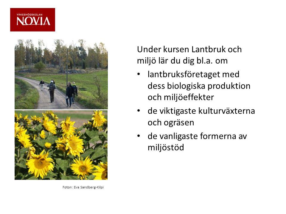 Som miljöplanerare kan du också uppgöra skötselplaner för kulturlandskap Foton: Eva Sandberg-Kilpi