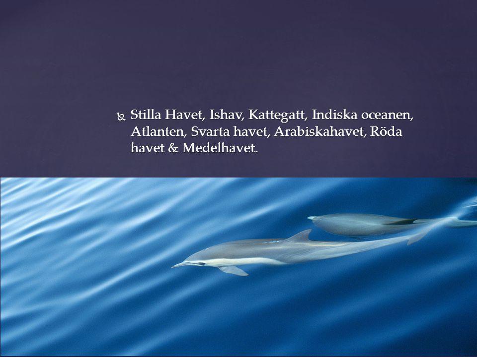  Stilla Havet, Ishav, Kattegatt, Indiska oceanen, Atlanten, Svarta havet, Arabiskahavet, Röda havet & Medelhavet. Hav