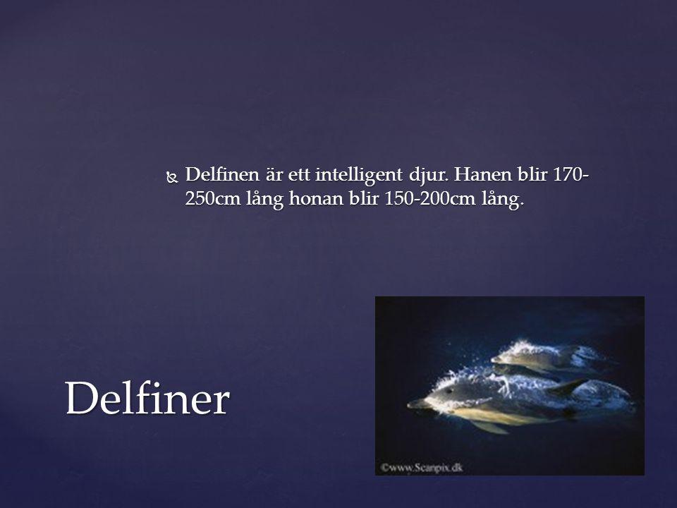  Delfinen är ett intelligent djur. Hanen blir 170- 250cm lång honan blir 150-200cm lång. Delfiner