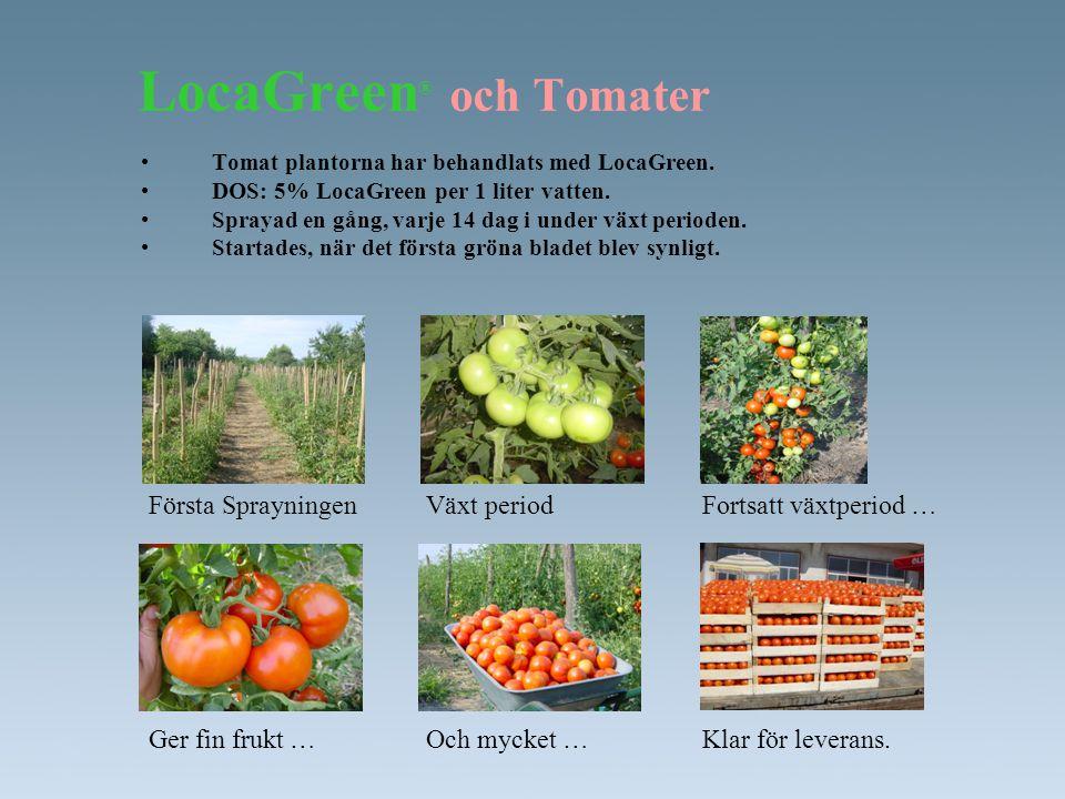 LocaGreen ® och Tomater •Tomat plantorna har behandlats med LocaGreen. •DOS: 5% LocaGreen per 1 liter vatten. •Sprayad en gång, varje 14 dag i under v