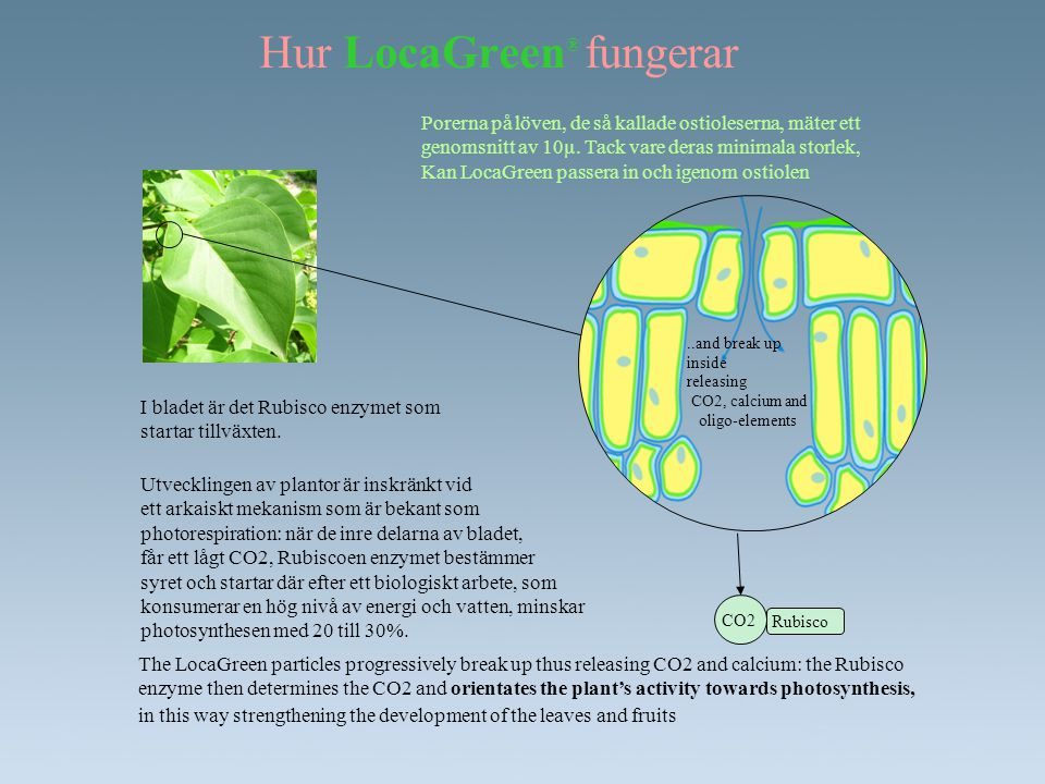 LocaGreen ® : data blad •Bladgödsel •Förstärker plantan via förmedling till bladet.