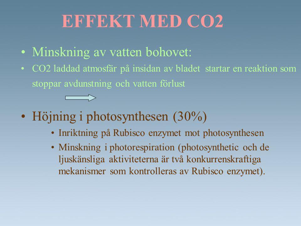 EFFEKT MED CO2 •Minskning av vatten bohovet: •CO2 laddad atmosfär på insidan av bladet startar en reaktion som stoppar avdunstning och vatten förlust