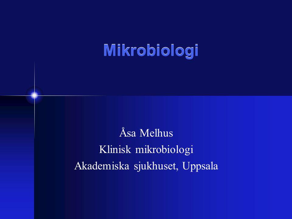 Aktuella bakterier i öronsfären •Luftvägspatogener (S.pneumoniae, H.influenzae, M.catarrhalis, betahemolytiska streptokocker) •Munflora (F.necrophorum, andra anaeroba bakterier, alfahemolytiska streptokocker) •Primära sårbakterier (S.aureus, P.aeruginosa, Vibrioarter) •Tarmbakterier (K.pneumoniae, E.coli, enterokocker m.fl.) •Hudbakterier (KNS)