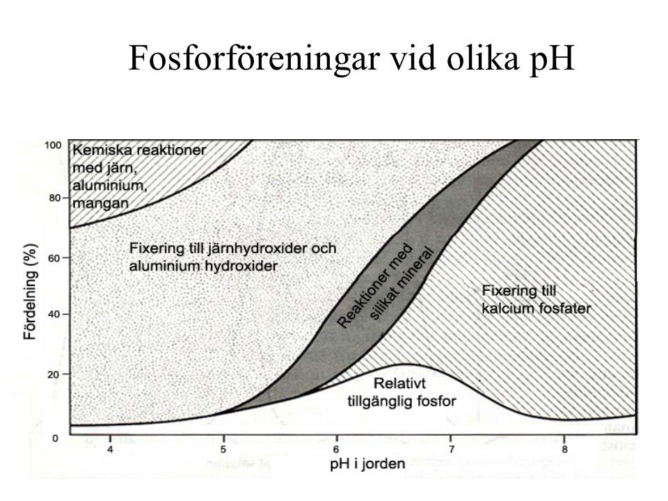 Fosforföreningar vid olika pH
