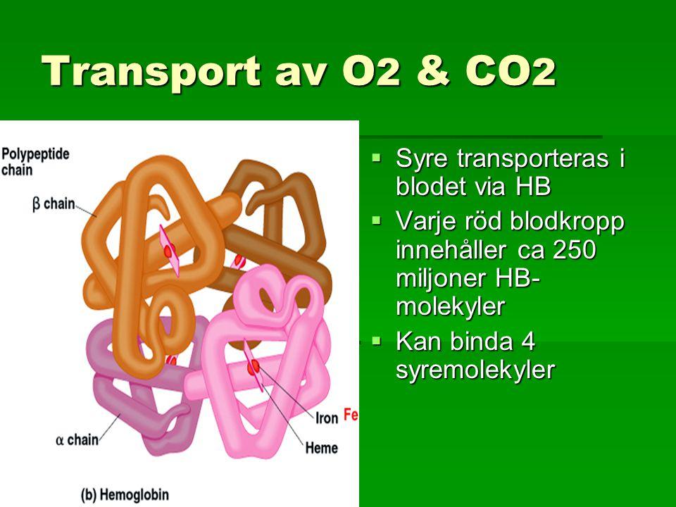 Transport av O 2 & CO 2  Syre transporteras i blodet via HB  Varje röd blodkropp innehåller ca 250 miljoner HB- molekyler  Kan binda 4 syremolekyler