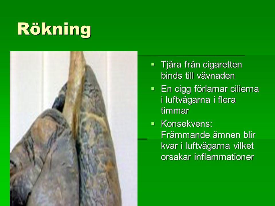 Rökning  Tjära från cigaretten binds till vävnaden  En cigg förlamar cilierna i luftvägarna i flera timmar  Konsekvens: Främmande ämnen blir kvar i luftvägarna vilket orsakar inflammationer