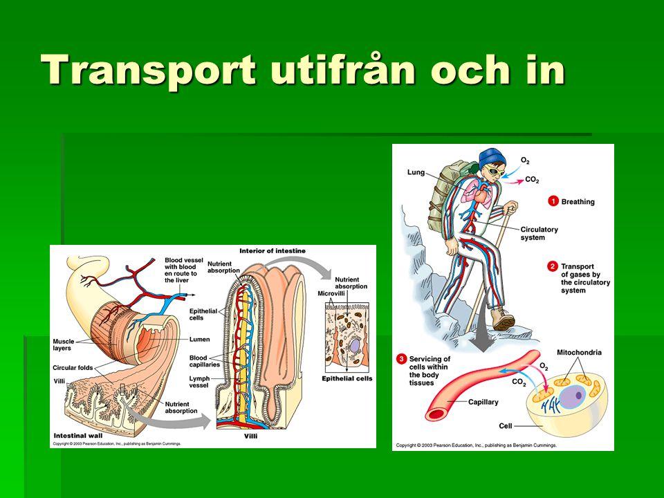 Transport utifrån och in