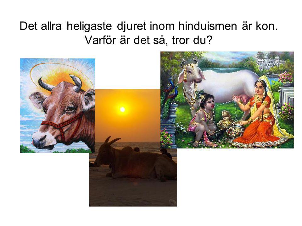 Det allra heligaste djuret inom hinduismen är kon. Varför är det så, tror du?