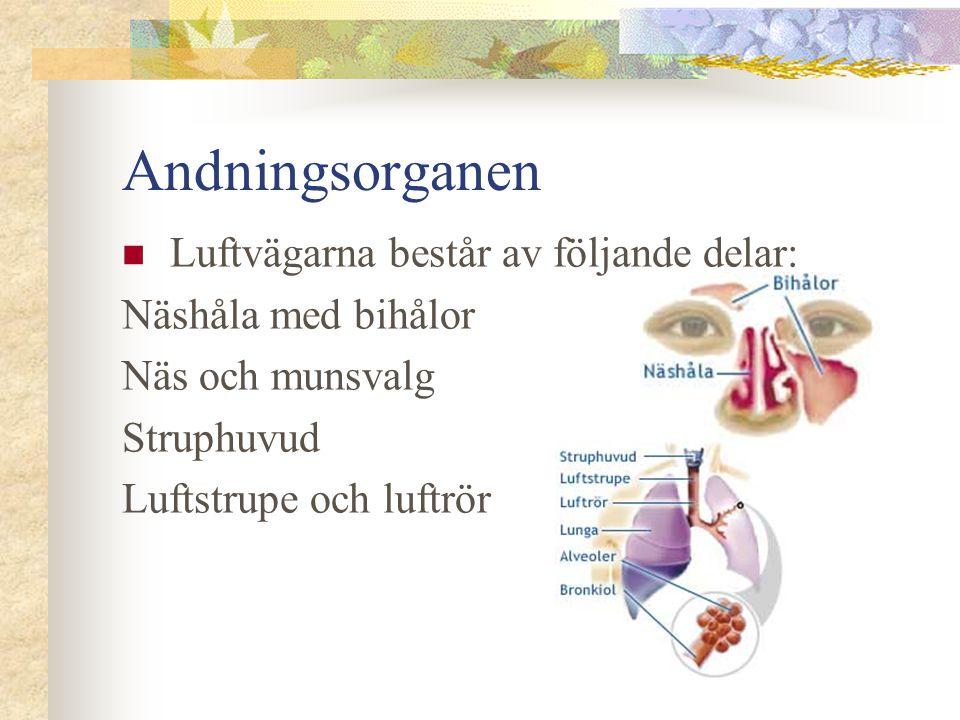 Andningsorganen  Luftvägarna består av följande delar: Näshåla med bihålor Näs och munsvalg Struphuvud Luftstrupe och luftrör