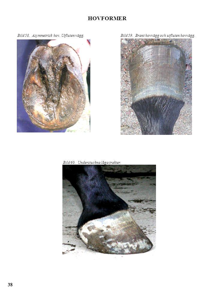 HOVFORMER Bild 58. Asymmetrisk hov. Utfluten vägg.Bild 59. Brant hovvägg och utfluten hovvägg. Bild 60. Understuckna låga trakter. 38