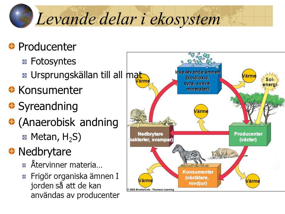 Levande delar i ekosystem Värme Icke-levande ämnen (koldioxid, syre, kväve, mineraler) Producenter(växter)Nedbrytare (bakterier, svampar) Konsumenter(