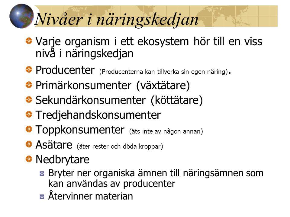 Nivåer i näringskedjan Varje organism i ett ekosystem hör till en viss nivå i näringskedjan Producenter (Producenterna kan tillverka sin egen näring).