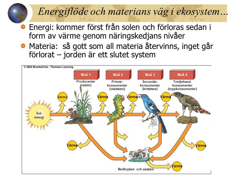 Energiflöde och materians väg i ekosystem… Energi: kommer först från solen och förloras sedan i form av värme genom näringskedjans nivåer Materia: så