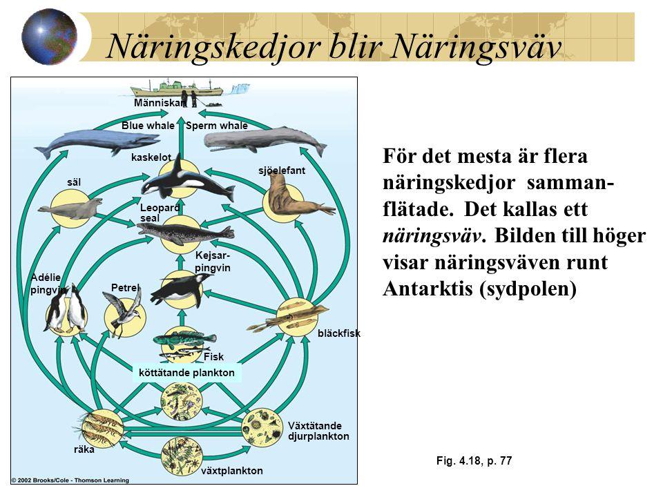 Näringskedjor blir Näringsväv Fig. 4.18, p. 77 Människan Blue whaleSperm whale säl kaskelot sjöelefant Leopard seal Adélie pingvin Petrel Fisk bläckfi