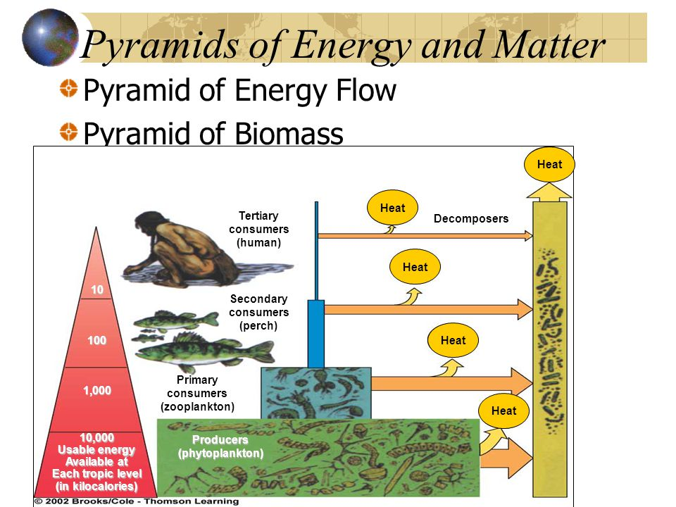 Pyramids of Energy and Matter Pyramid of Energy Flow Pyramid of Biomass Heat 10 100 1,000 10,000 Usable energy Available at Each tropic level (in kilocalories) Producers(phytoplankton) Primary consumers (zooplankton) Secondary consumers (perch) Tertiary consumers (human) Decomposers