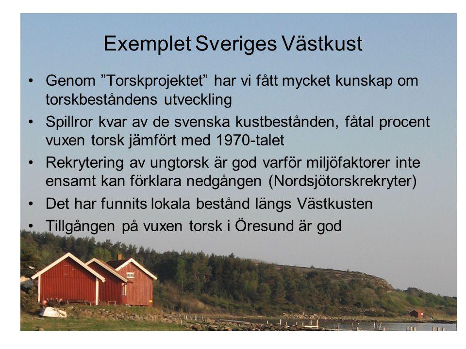 """Exemplet Sveriges Västkust •Genom """"Torskprojektet"""" har vi fått mycket kunskap om torskbeståndens utveckling •Spillror kvar av de svenska kustbestånden"""