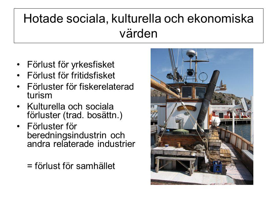 Hotade sociala, kulturella och ekonomiska värden •Förlust för yrkesfisket •Förlust för fritidsfisket •Förluster för fiskerelaterad turism •Kulturella