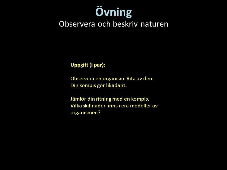 Övning Observera och beskriv naturen Uppgift (i par): Observera en organism. Rita av den. Din kompis gör likadant. Jämför din ritning med en kompis. V