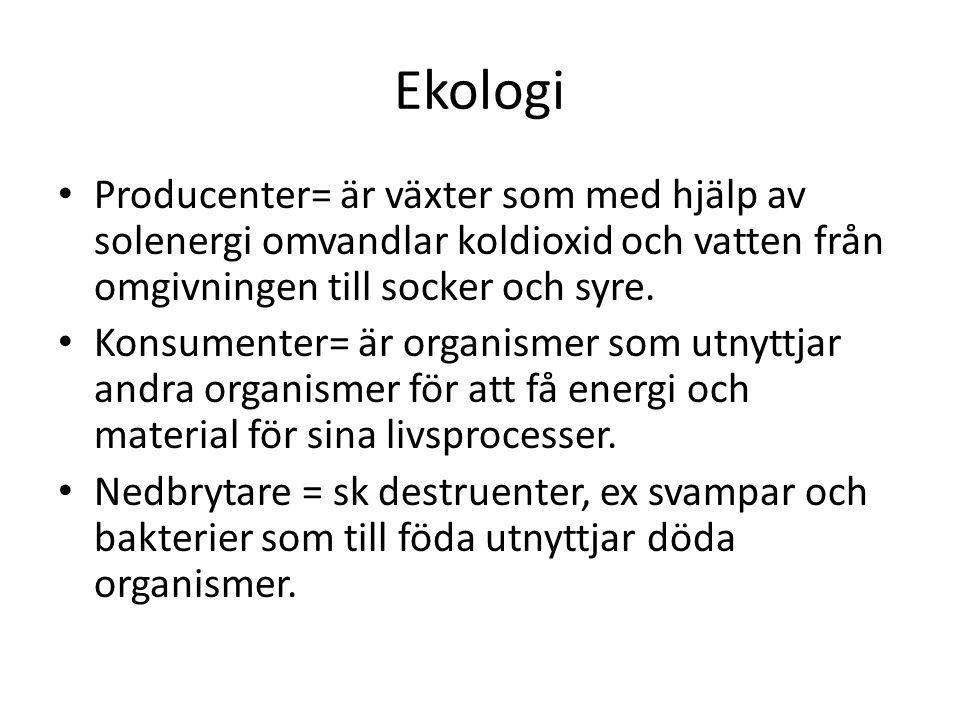Ekologi • Producenter= är växter som med hjälp av solenergi omvandlar koldioxid och vatten från omgivningen till socker och syre. • Konsumenter= är or