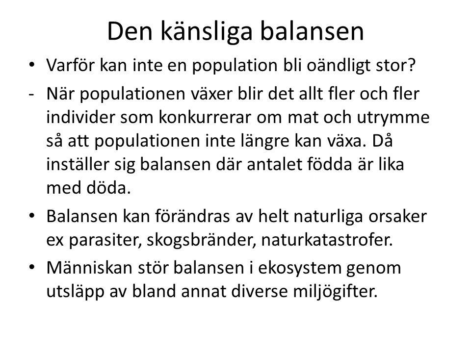Den känsliga balansen • Varför kan inte en population bli oändligt stor? -När populationen växer blir det allt fler och fler individer som konkurrerar