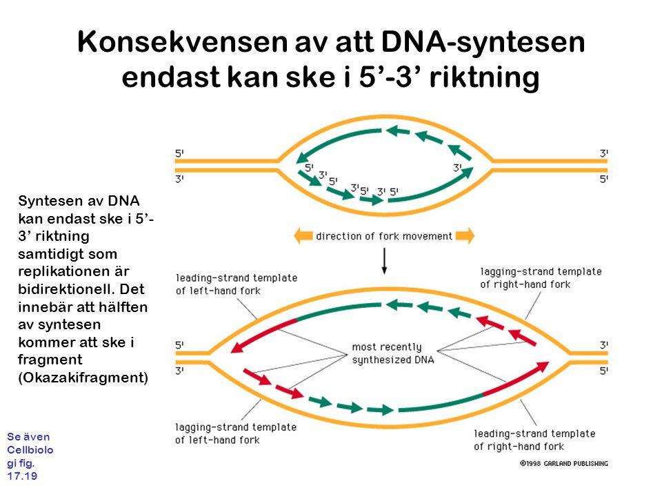 Konsekvensen av att DNA-syntesen endast kan ske i 5'-3' riktning Syntesen av DNA kan endast ske i 5'- 3' riktning samtidigt som replikationen är bidirektionell.