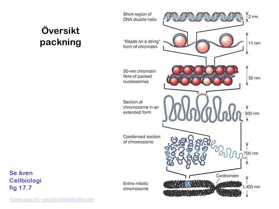 Översikt packning home.wxs.nl/ ~gkorthof/korthof59.htm Se även Cellbiologi fig 17.7